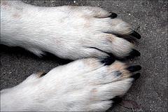 dog_paw